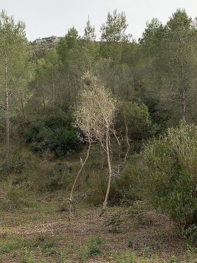 Un diálogo entre árboles